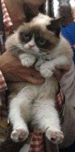 Grumpy_Cat_SXSW_2013_cropped