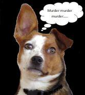 murder-murder