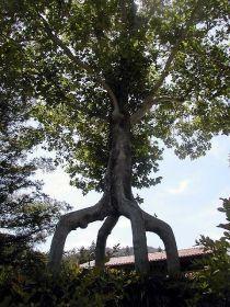 4leg-giant tree