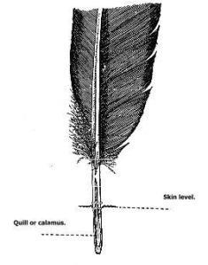 Feather Contour