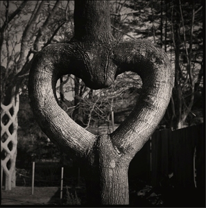 shaped-tree-007