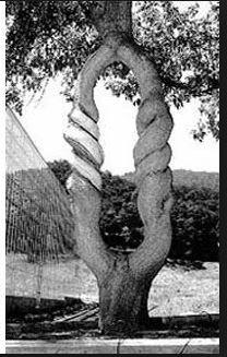 tree6