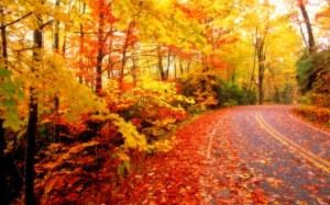 autumn-leaves-001