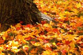 autumn-leaves-tree-trunk-4625