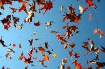 fallen_leaves_11